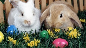 Пасхальные кролики - символ плодородия
